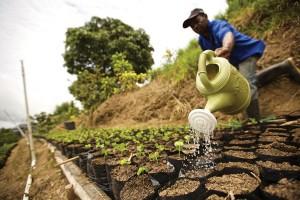 marley-coffee-farmer